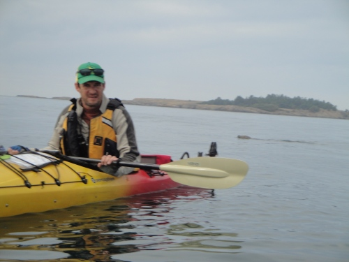 Kayaking lopez with harbor seal in the background.