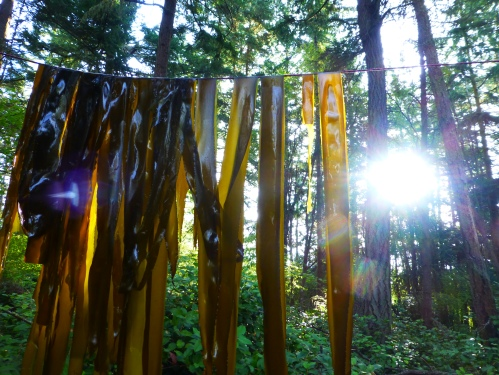 the kelp clothes line
