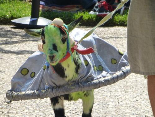 goat-saucer