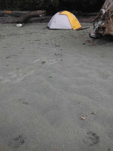 Wolf prints near the tent.
